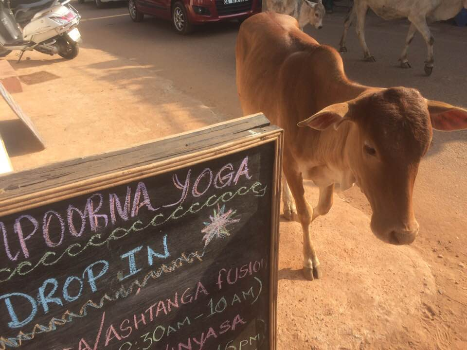 drop in yoga classes goa