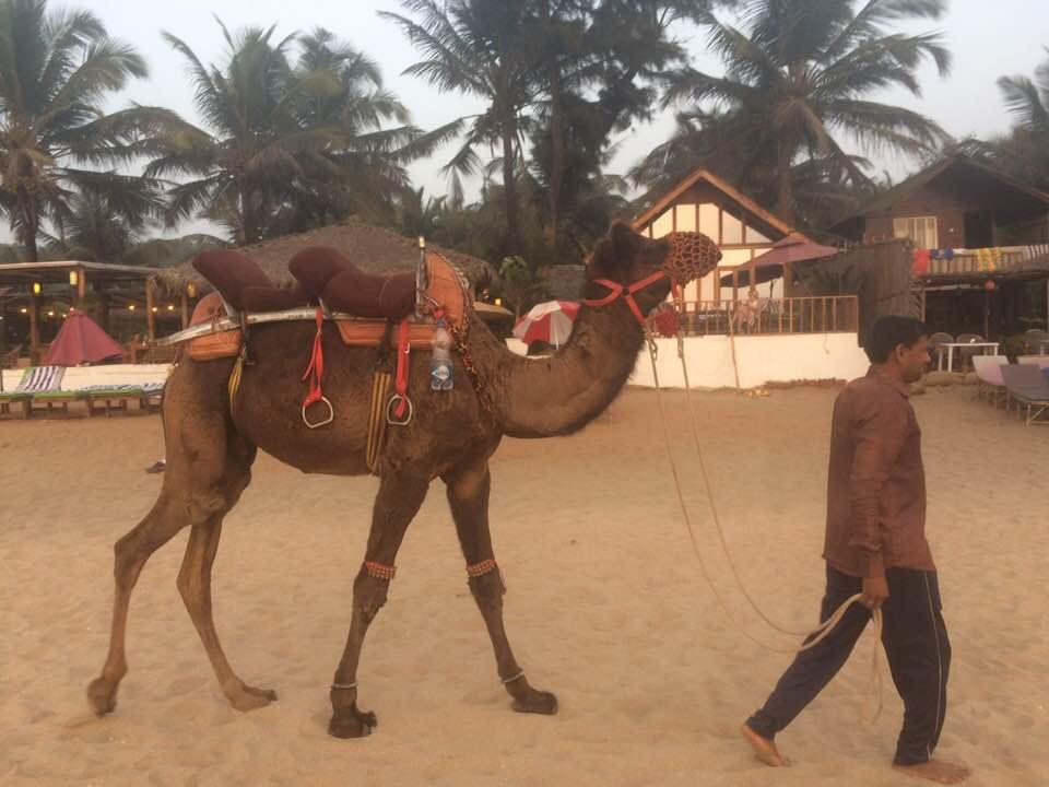 Agonda Beach, Goa India
