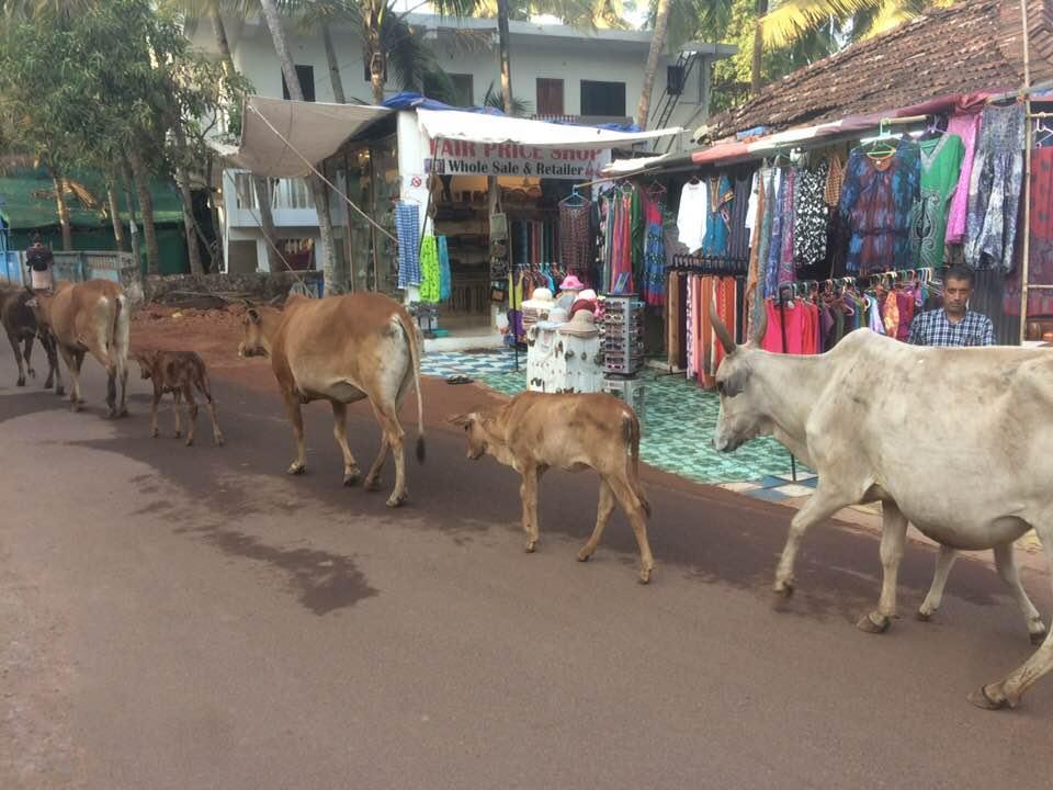 YTTC Agona, Goa