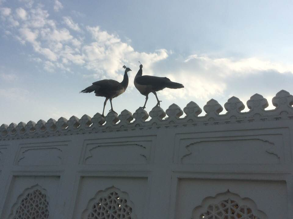 Sampoorna Yoga Blog - Golden Triangle India21